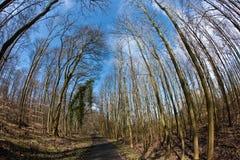 La trayectoria a través del árbol de madera y de la primavera corona en el cielo azul profundo Fotografía de archivo