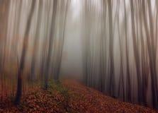 La trayectoria a través del bosque Imagen de archivo libre de regalías