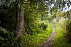 La trayectoria a través del bosque Fotos de archivo