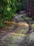 La trayectoria a través del bosque Fotografía de archivo