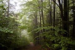 La trayectoria a través del bosque Foto de archivo libre de regalías