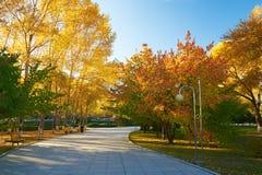 La trayectoria y la puesta del sol de los árboles del otoño Foto de archivo libre de regalías