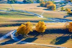 La trayectoria y los árboles de oro en la pradera Imagenes de archivo