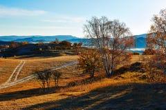 La trayectoria y los árboles en salida del sol de la estepa de la caída Imagen de archivo libre de regalías