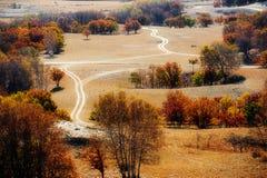 La trayectoria y los árboles otoñales en el prado Fotografía de archivo libre de regalías