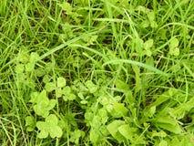 La truffe de 4 feuilles dans le domaine, énigme photos stock