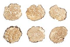 La truffe noire découpe la collection en tranches sur le blanc Image stock