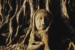 la tête noire de Bouddha a isolé intense en pierre latéral d'éclairage Image libre de droits
