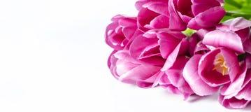 La tulipe rose fleurit des coins d'isolement sur le fond blanc photos stock