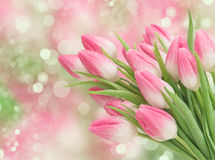 La tulipe rose fleurit des fleurs de ressort photos libres de droits