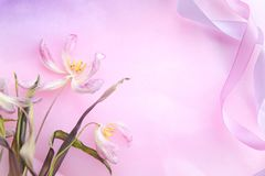 La tulipe rose tendre défraîchie et deux ont tordu des rubans sur le fond rose de couleur de gradient Vue faite en rubans tordus  Image stock