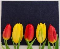 La tulipe rouge et jaune de ressort frais fleurit le macro de plan rapproché sur la vue supérieure de fond noir photographie stock