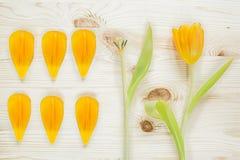 La tulipe sur la table Photos libres de droits
