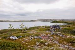 La tundra nel Circolo polare artico Immagini Stock