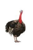 La Turchia Fotografia Stock