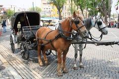 La Turchia, cavalli a Costantinopoli Immagini Stock