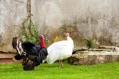 La Turchia fuori Fotografie Stock