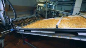 La unidad equipada de la planta está transportando las patatas a la inglesa de patata almacen de video