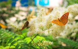 La urticaria de la mariposa se sienta en una flor Imágenes de archivo libres de regalías