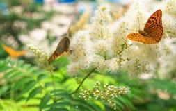 La urticaria de la mariposa se sienta en una flor Foto de archivo