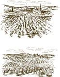 La uva aterriza bosquejos ilustración del vector