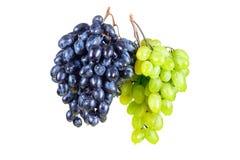 La uva azul y verde con agua cae blanco aislado Imagen de archivo libre de regalías