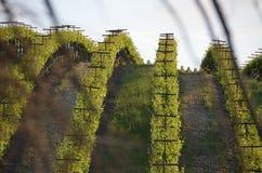 La uva coloca Napa Valley en la manera a Santa Rosa Foto de archivo