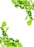 La uva deja el marco aislado en blanco Fotos de archivo libres de regalías