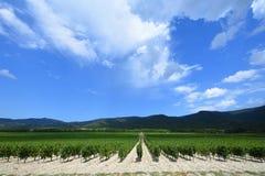 La uva hermosa y verde coloca cerca de las montañas en verano Fotos de archivo libres de regalías