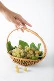 La uva trae la cosecha Imagen de archivo libre de regalías
