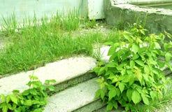 La végétation a saisi le vieux porche images stock