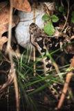 La víbora se camufla en el arbusto fotografía de archivo libre de regalías