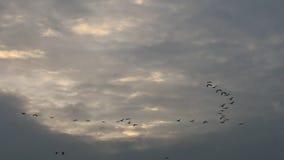 la V-formación de vuelo cranes cerca de Bisdorf, Alemania Fotografía de archivo