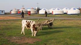 La vaca Foto de archivo libre de regalías