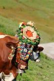 La vaca austríaca con un tocado durante ganado conduce en el Tyrol, Austria Fotos de archivo