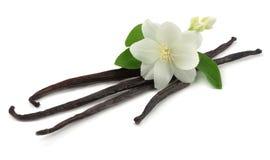 La vainilla se pega con la flor blanca aislada en el fondo blanco Fotografía de archivo