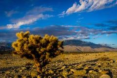 La vallée de Coachella, la Californie Photographie stock