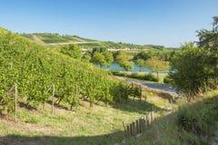 La vallée de la Moselle avec des vignobles chez Stadtbredimus images stock