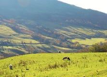 La vallée de Troutbeck Image libre de droits