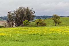 La vallée jaune III Images libres de droits