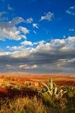 La valle con il cactus nella parte anteriore si è illuminata dal sole Immagine Stock