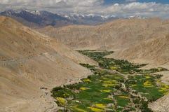 La valle della montagna con fogliame luminoso e la violenza gialla sistema il surro Fotografie Stock