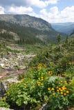 La valle di una corrente in montagne di Sayan Fotografia Stock Libera da Diritti