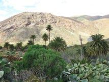 La valle di Vega de Rio Palmas su Fuerteventura Fotografie Stock