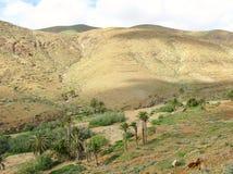 La valle di Vega de Rio Palmas su Fuerteventura Immagini Stock