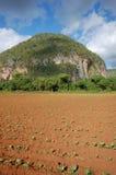 La valle di Vinales in Cuba Immagine Stock