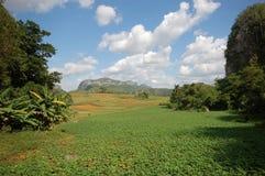 La valle di Vinales in Cuba Fotografia Stock Libera da Diritti