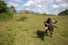 La valle di Vinales in Cuba Immagine Stock Libera da Diritti
