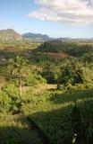 La valle di Vinales in Cuba Fotografia Stock