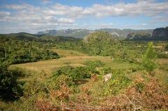 La valle di Vinales in Cuba Immagini Stock Libere da Diritti